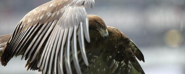 Der Adler bleibt. Stand heute. Foto: Stefan Krieger.