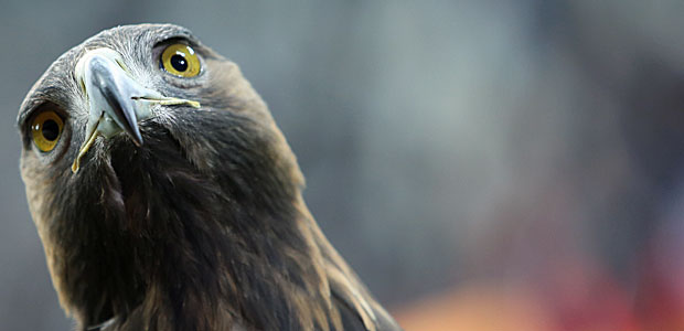 Der Adler wundert sich. Foto: Stefan Krieger.