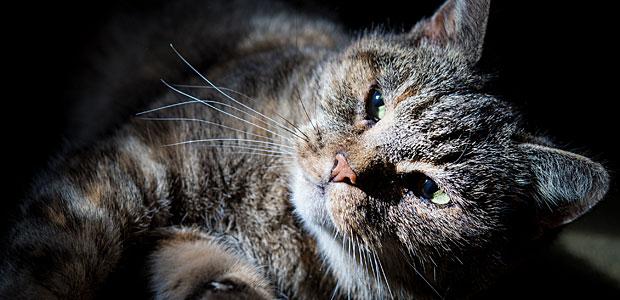 Katzenbild ohne Zopf. Foto: dpa.
