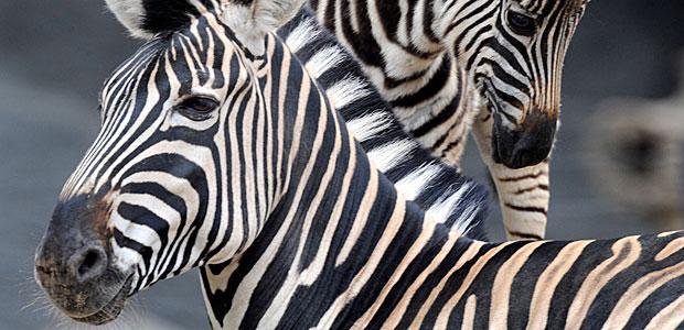 Symbolbild Investor. Foto: Reuters.
