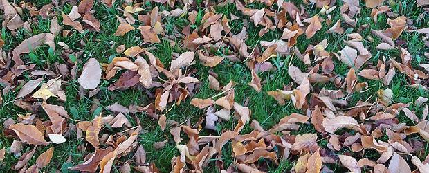 Herbstlaub. Foto by Wischhandy.
