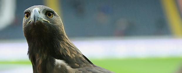 Der Adler bleibt zu Hause. Foto: Stefan Krieger.