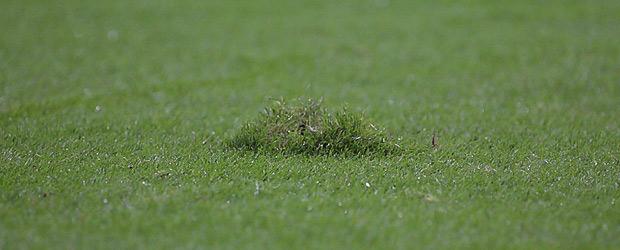 Das Gras ist grün. Foto: Stefan Krieger.