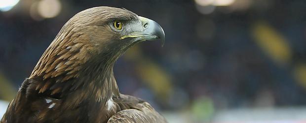 Der Vogel wundert sich. Foto: Stefan Krieger.