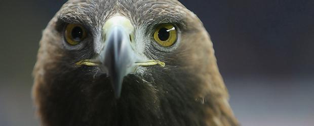Geht als Symbolbild immer: Der Adler. Foto: Stefan Krieger.