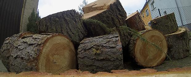 15 Meter Baum. Foto: Stefan Krieger.