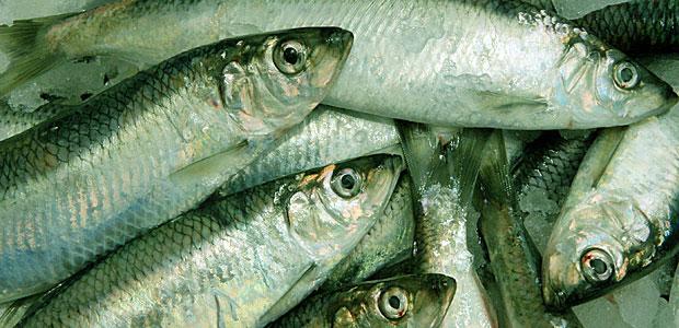 Fisch mit Grünstich, Symbolfoto. (dpa)