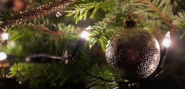 Ihr habt aber auch einen schönen Baum! Foto: Stefan Krieger.